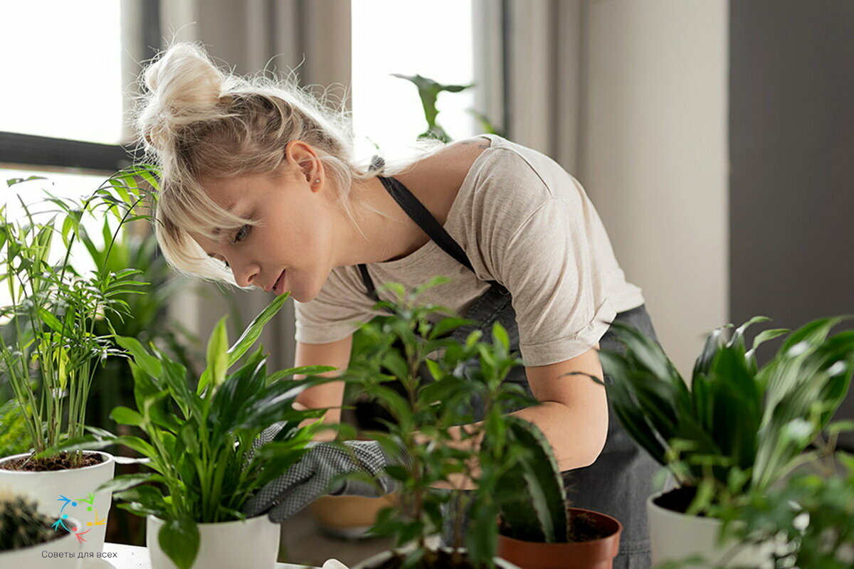 Целебное действие комнатных растений