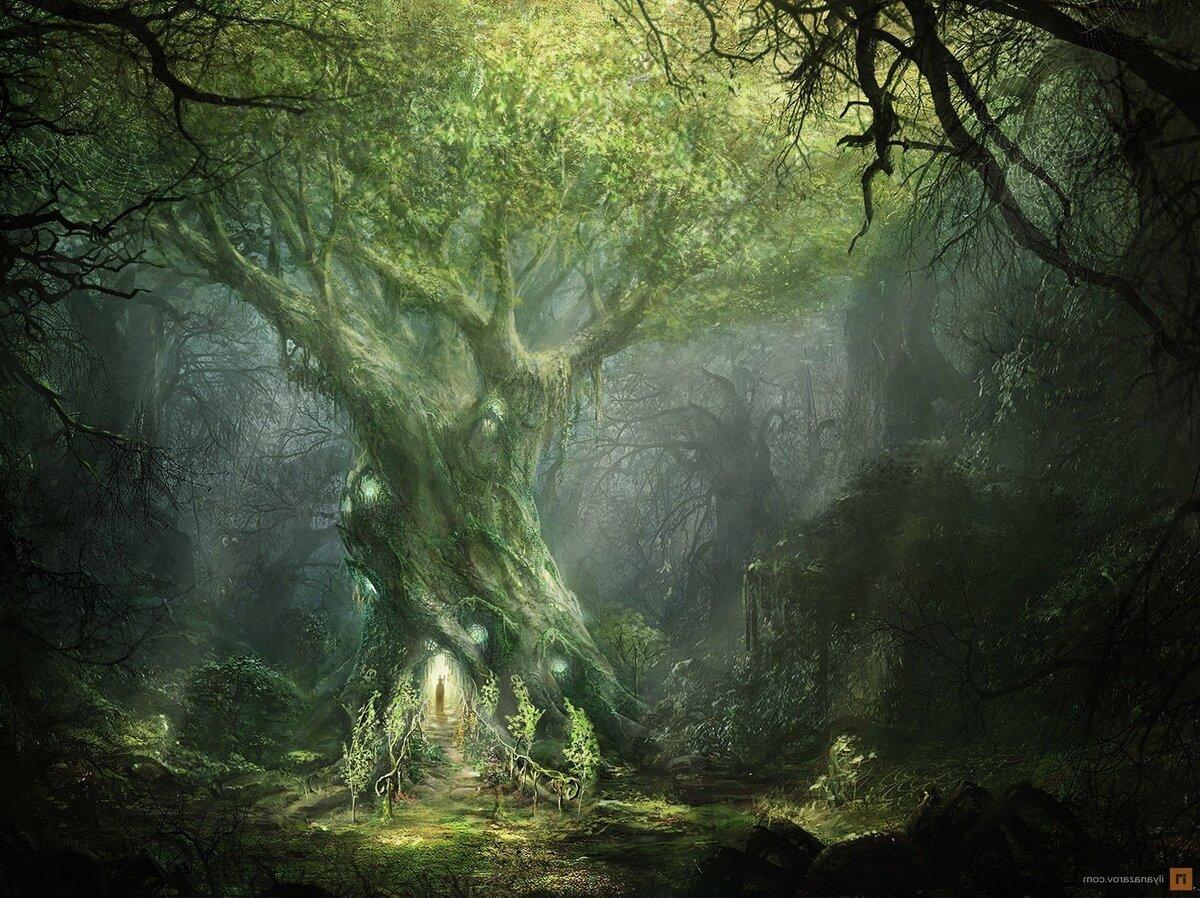 деревья друидов