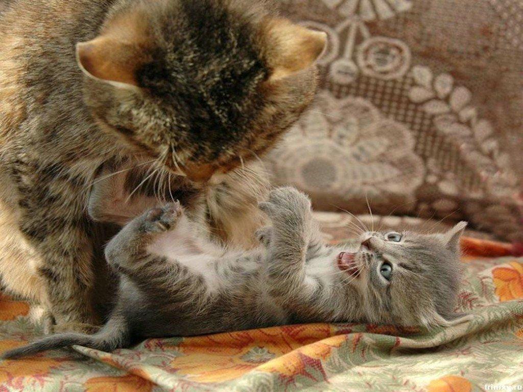 Фотки смешных кошек и котят, отпуска