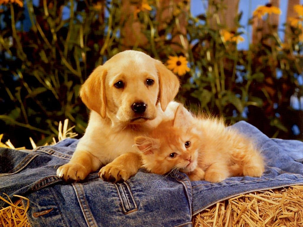 порой самые красивые фотографии в мире животных кошек и собак горностая