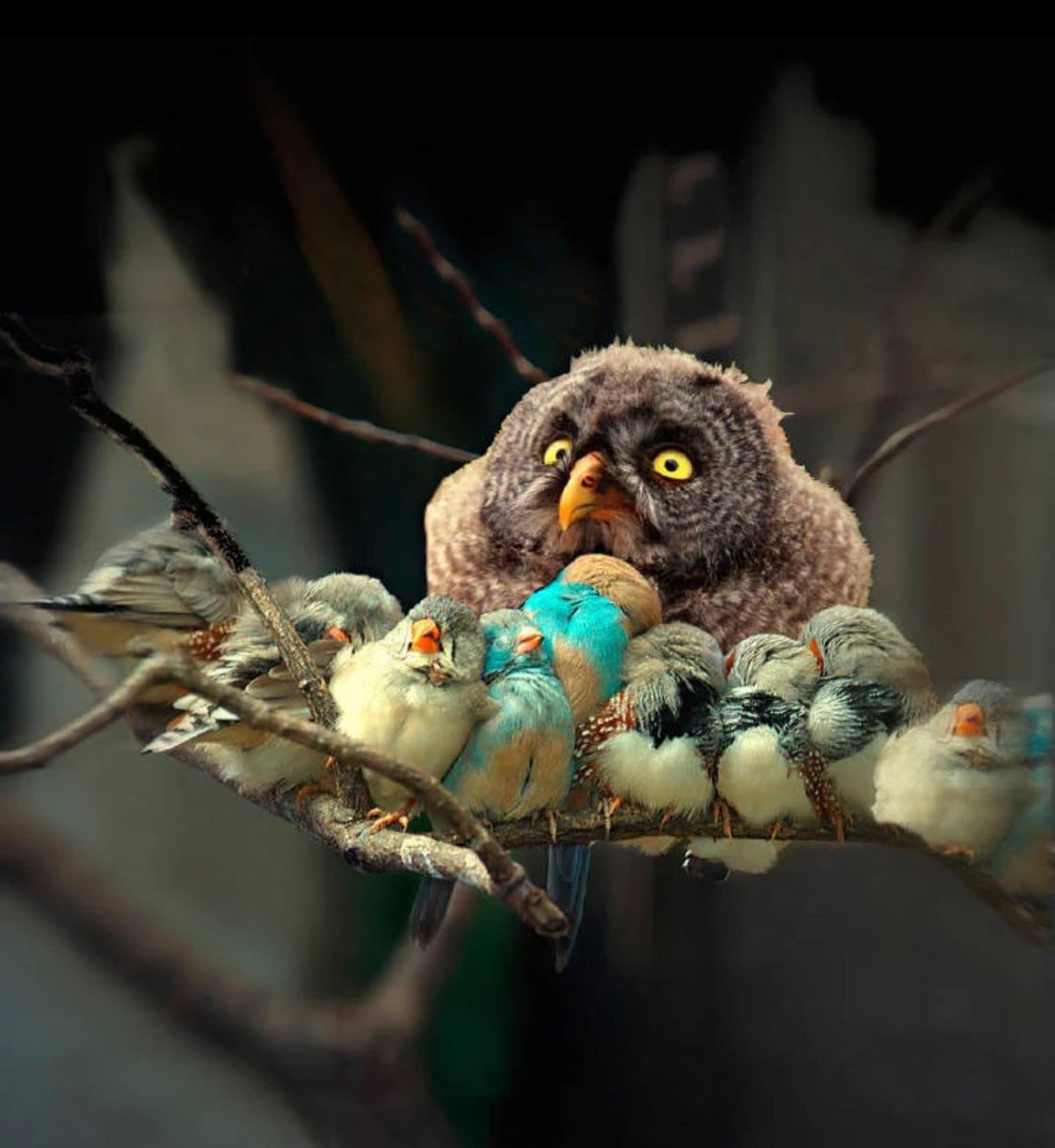 Демотиватор сова спит