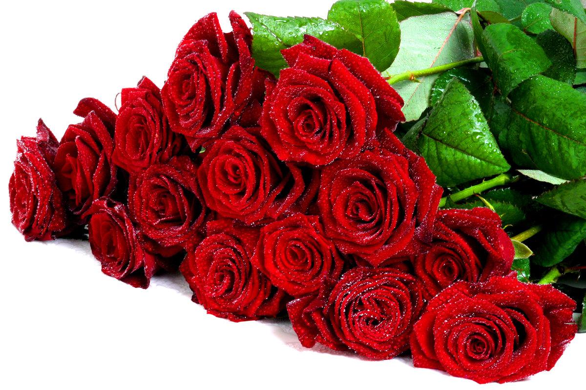 Картинки цветов розы красные, веселые