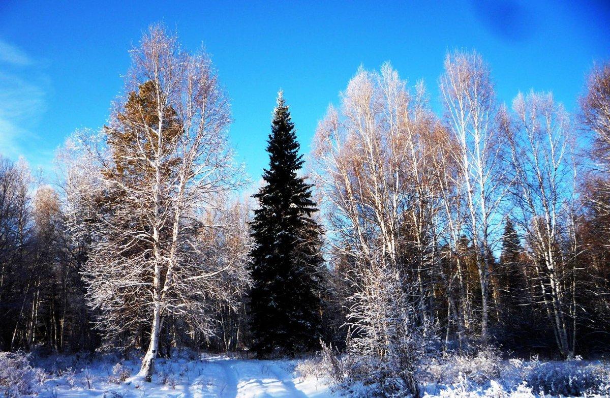 строгий картинка под стих зимы нашем сайте собраны
