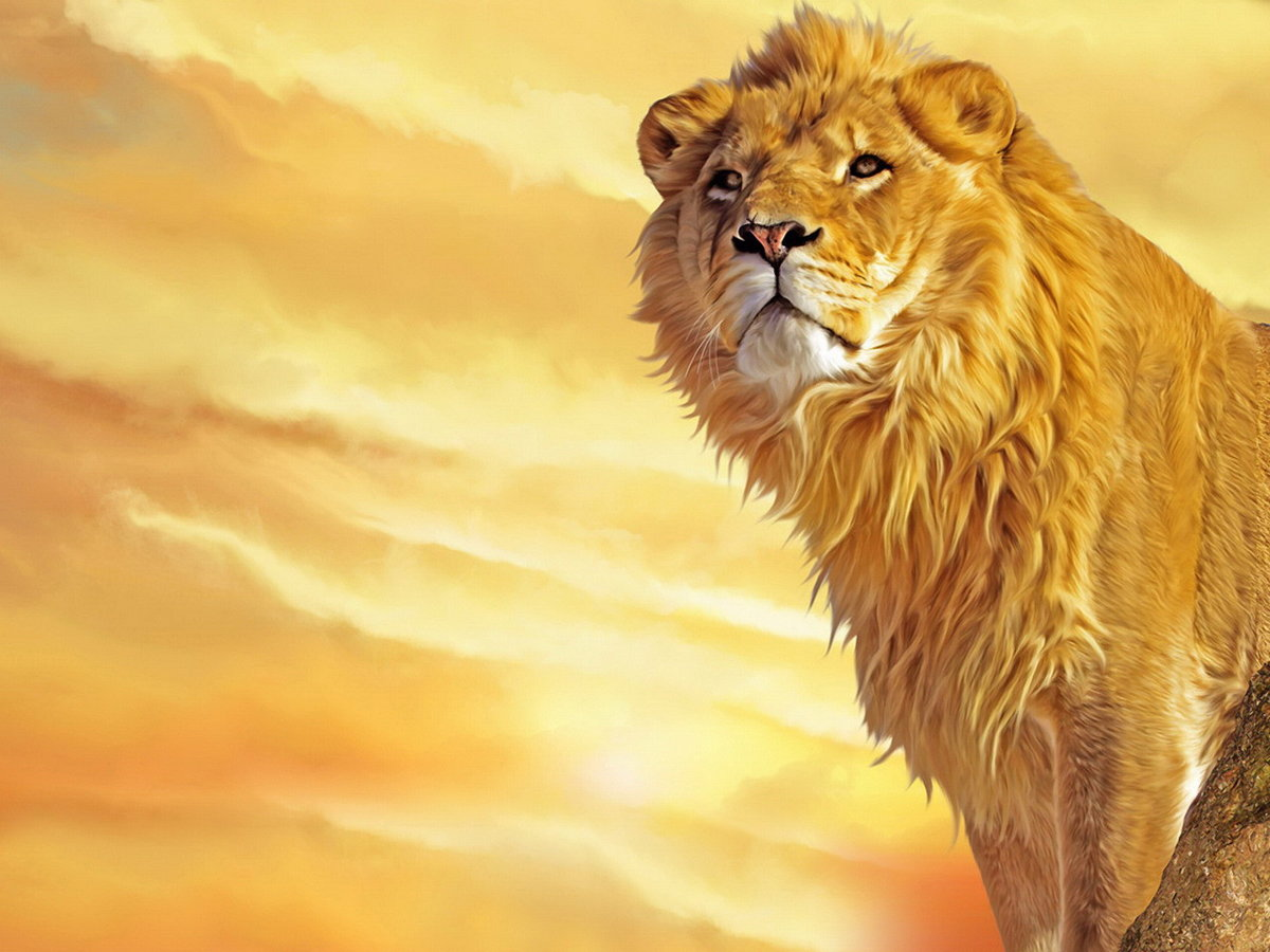 Открытки для, открытка для льва