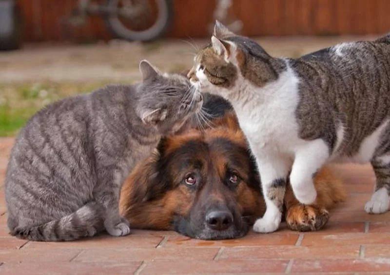 Картинки втроем животные