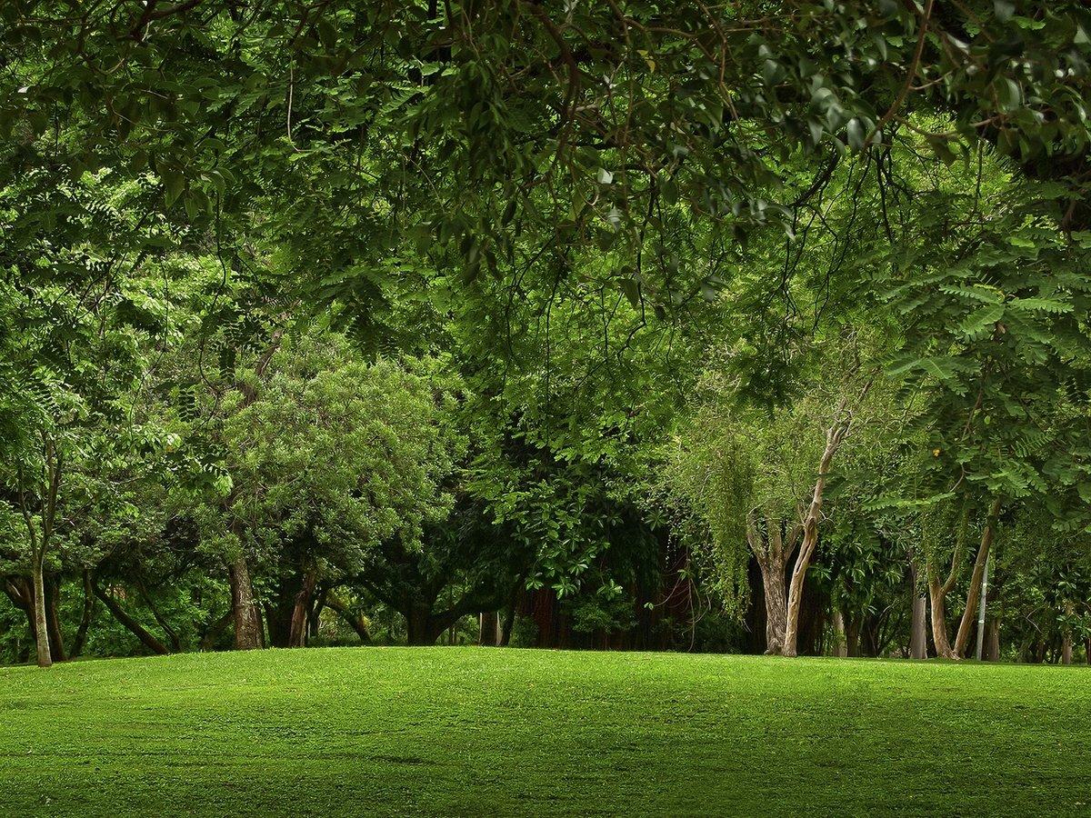 Зеленая поляна картинка