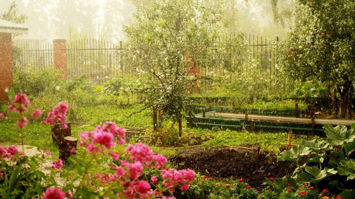 Картинки сад в июне поклеена обоями