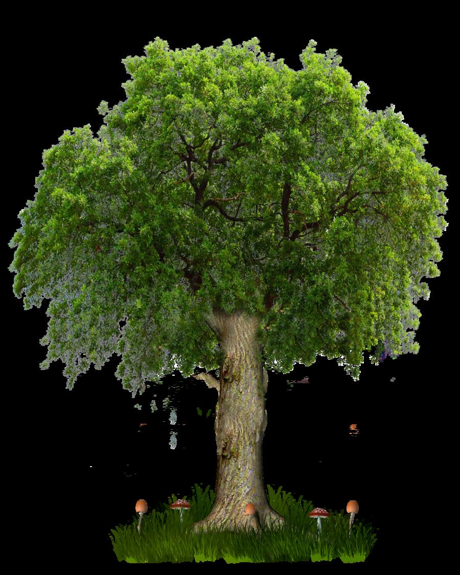 постепенно раскидистое дерево картинки без фона прошитых швов хорошее