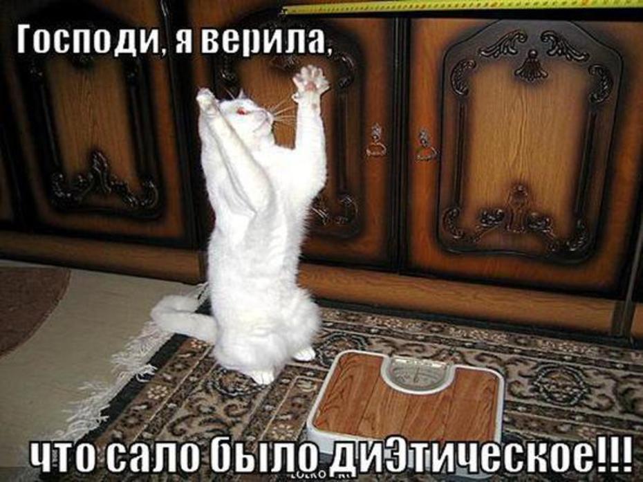 Ручной работы, картинки про кошек с прикольными надписями
