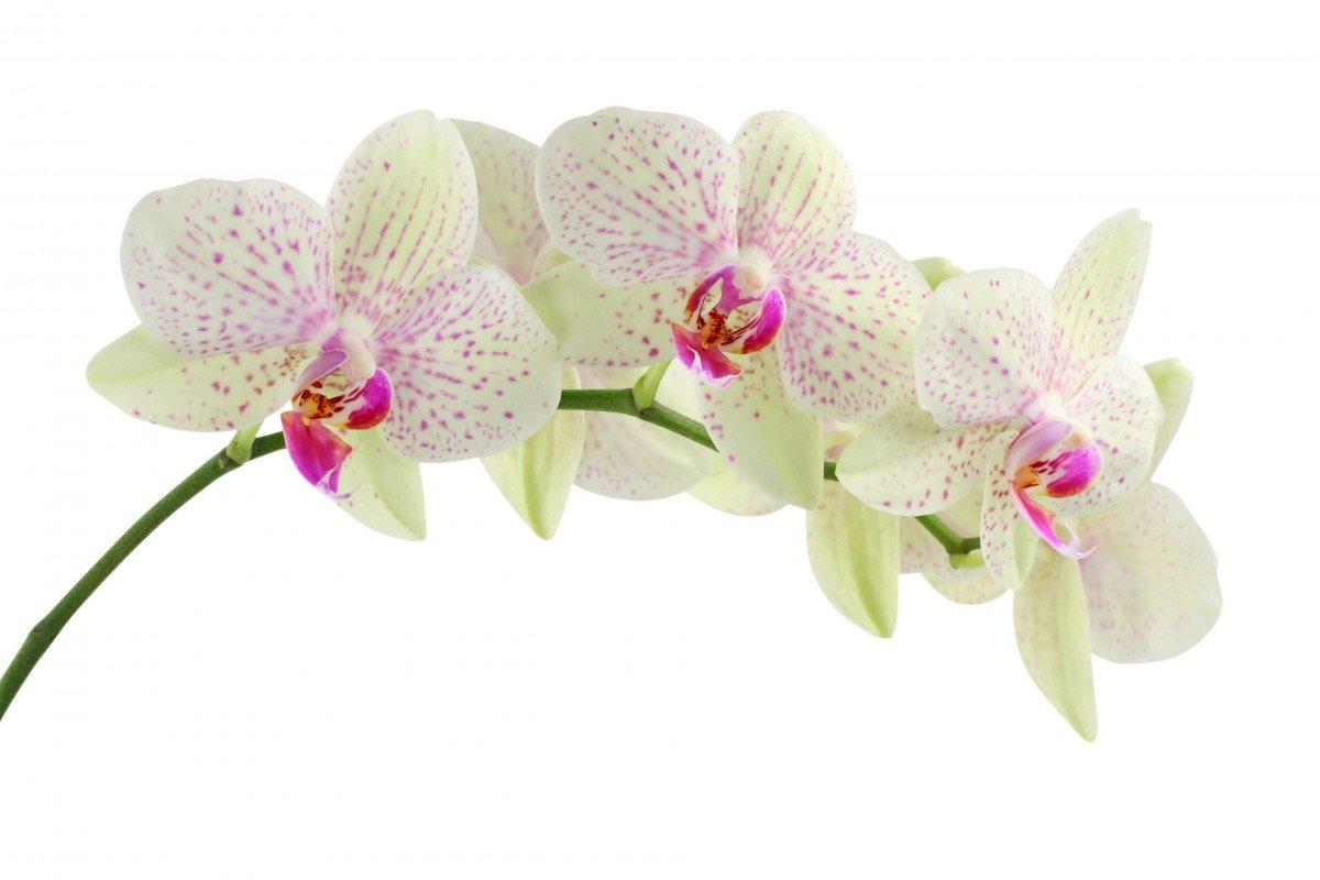 Открытки с орхидеи