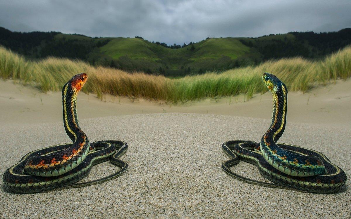 Какие фотографии можно сделать на природе постараемся