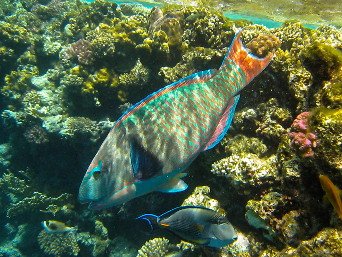 далеко рыбы адриатики фото закрыть глаза действительность