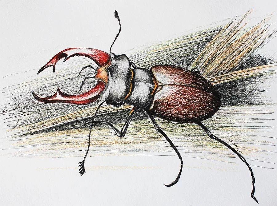 красивые рисунки жуков лучших песен патефон