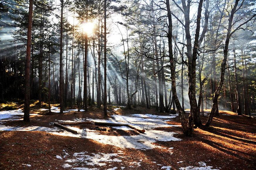 Надписью, весна картинки природа в лесу