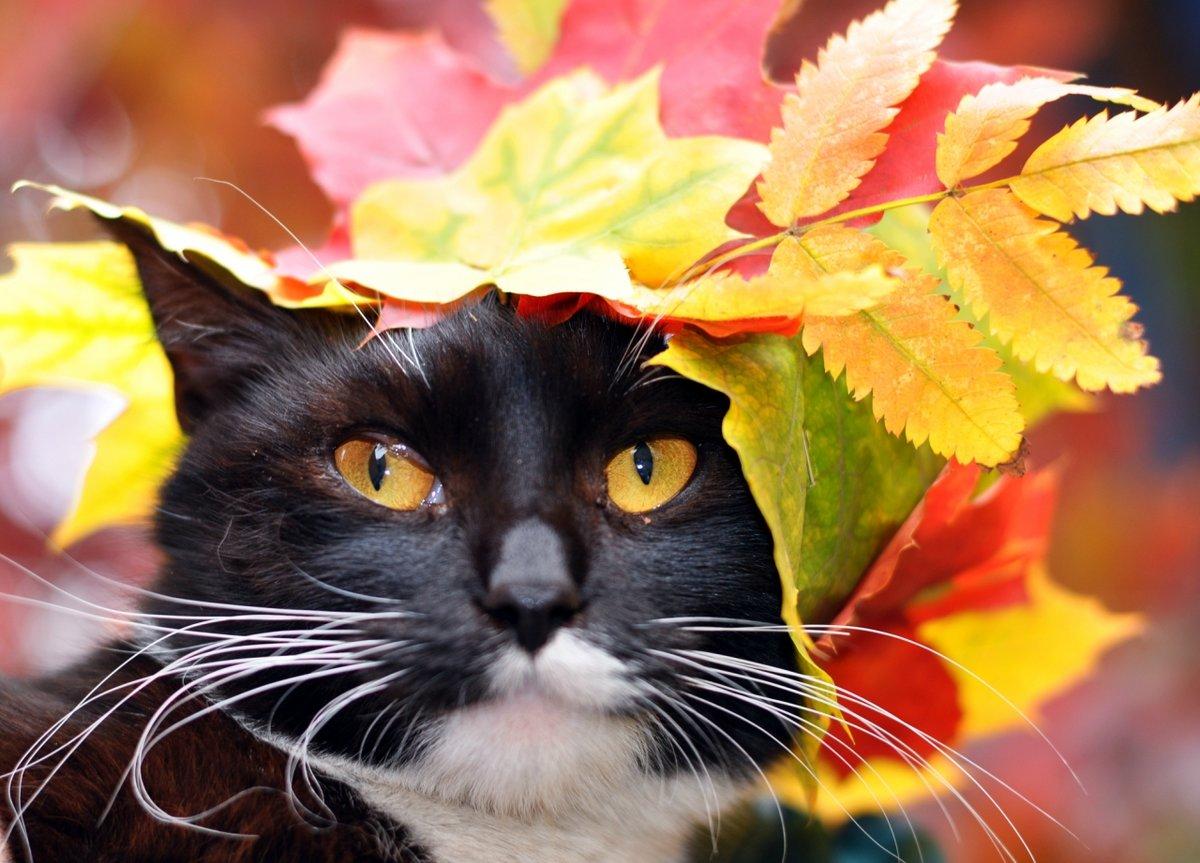 40-летием, открытки осень и котики