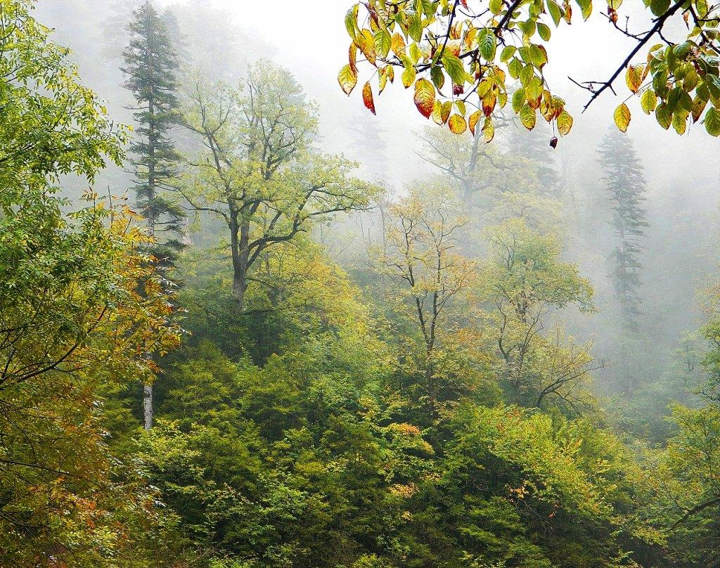 осень, дождь,туман...#0Ñ #деревья #лес #осень #природа #путешествие #туман #туризм