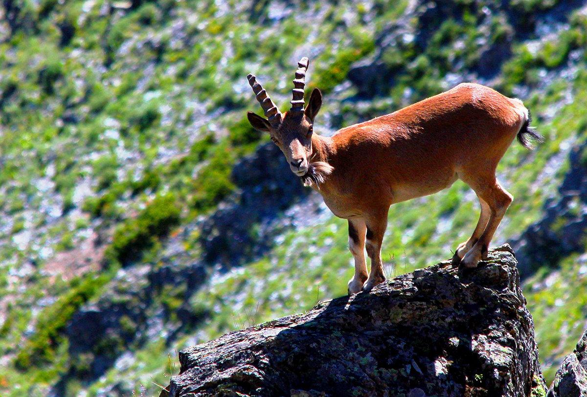 животный мир алтая картинки онлайн, фотоэффекты онлайн