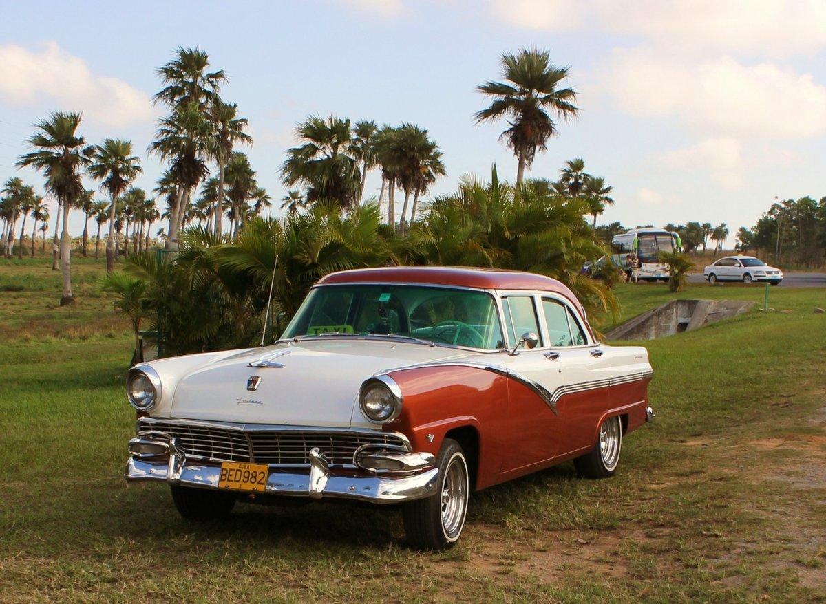 крупные полумахровые кубинские автомобили фото морде льва расположено