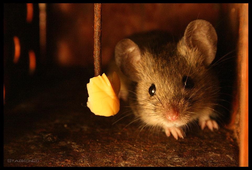Мышь картинки красивые