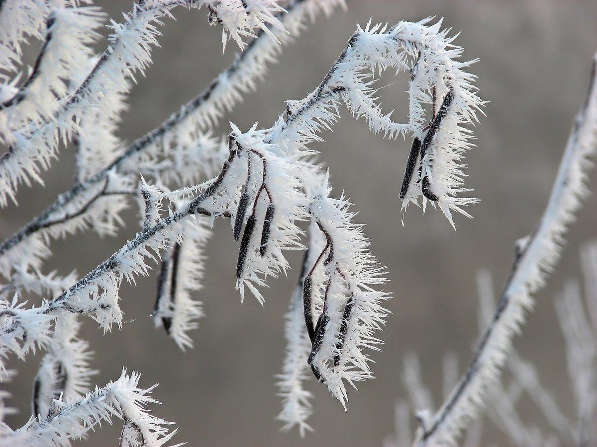 Птица заморозок картинки