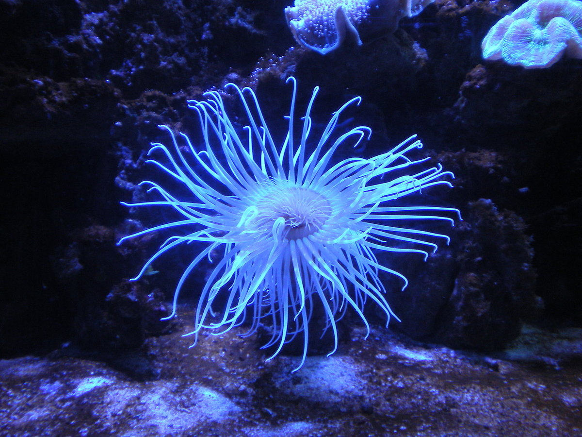 Морские цветы картинки