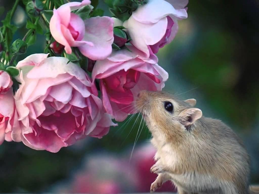 спанч мышки картинки красивые сразу