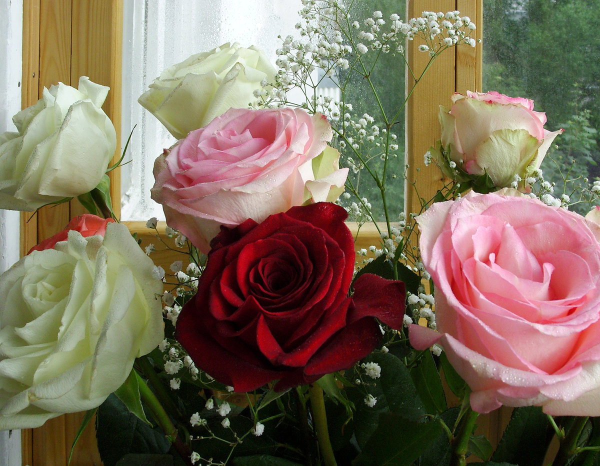 Утешением открытки, картинки цветы красивые с днем учителя