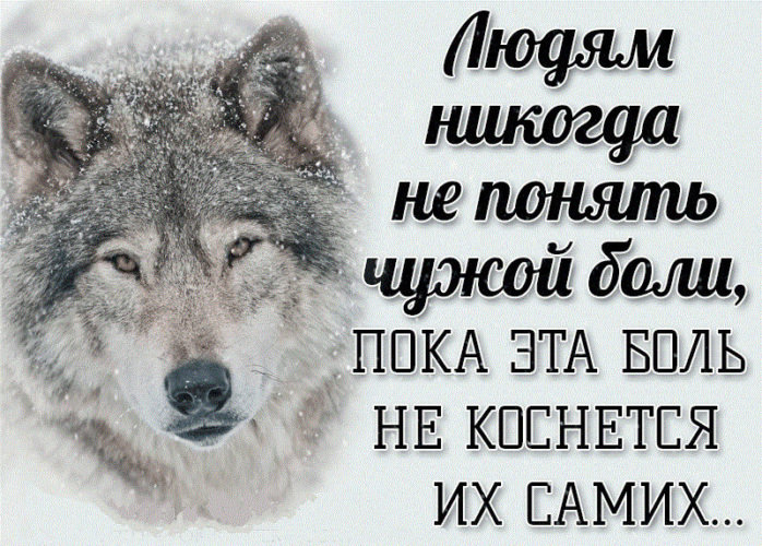 Картинка, картинки с волками и надписями про жизнь со смыслом новые