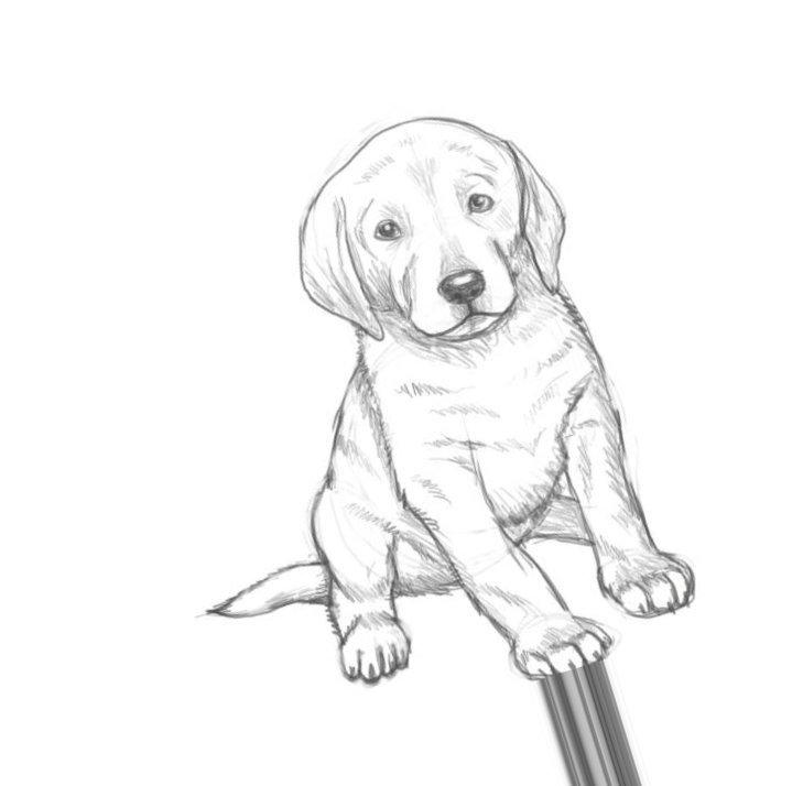 Картинка рисованная карандашом для начинающих