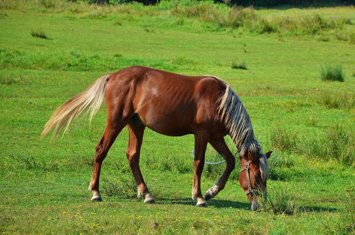 Лошадь домашняя картинка