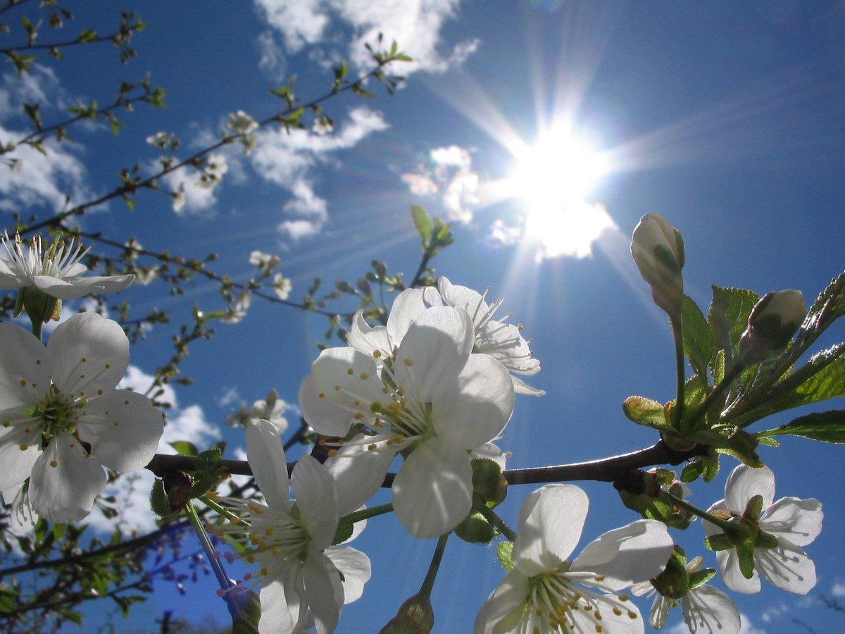 шедевры, которые фото весеннее солнышко только