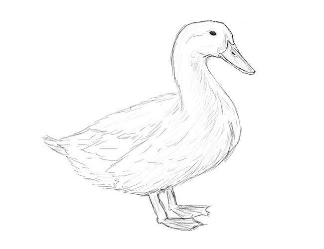 картинки утки как нарисовать простым