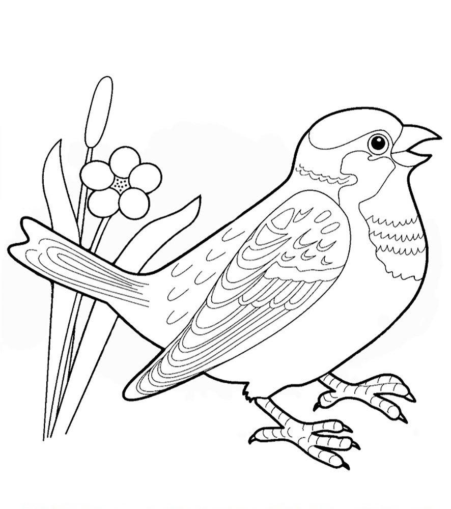 Распечатать птиц картинки