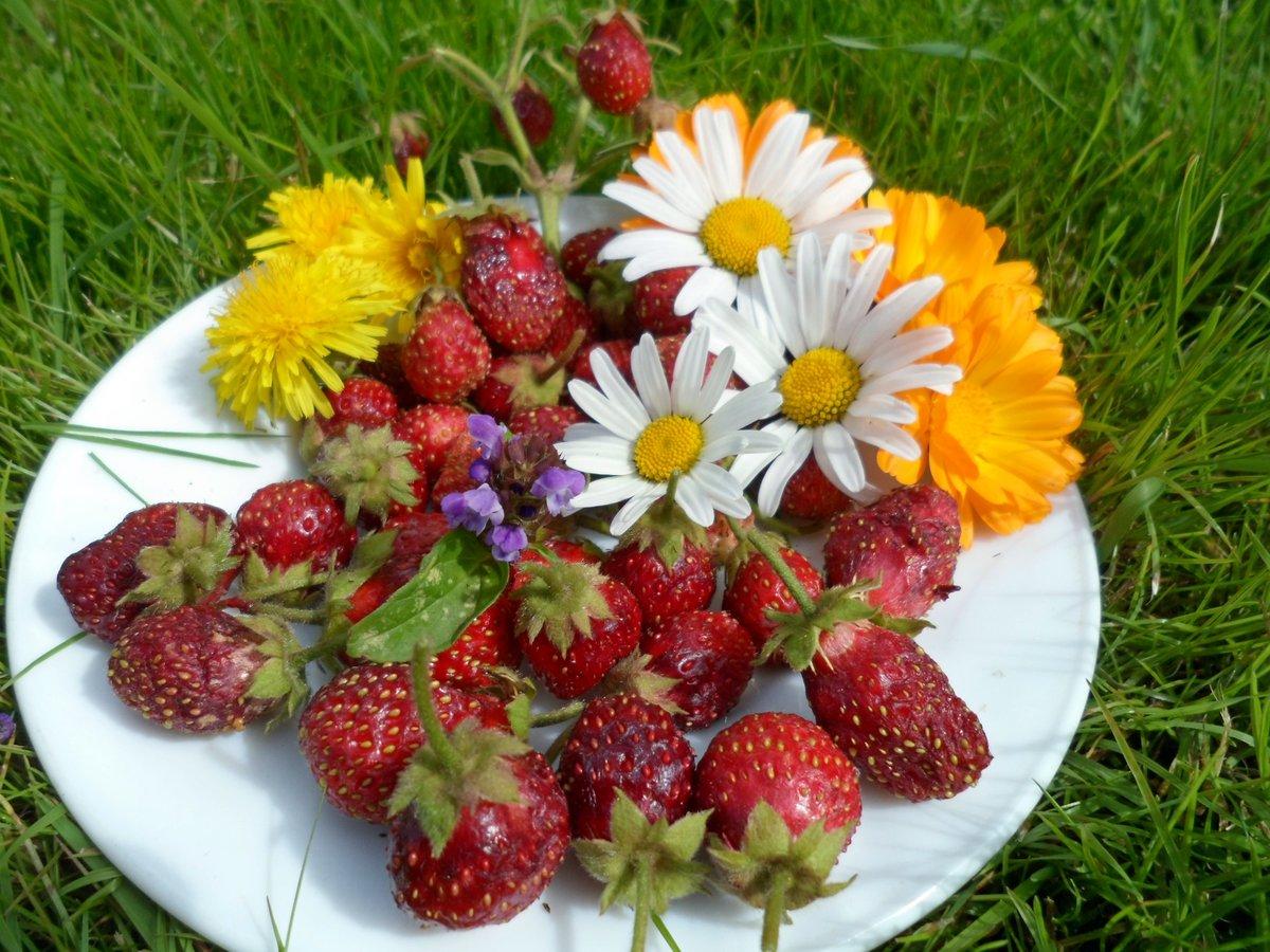 картинки с полевыми цветами и ягодами рода переводится