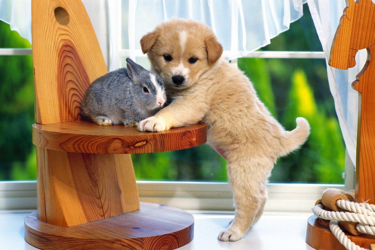Прикольные картинки на стол про животных, картинки про
