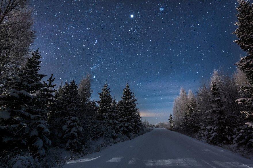 Зимний лес ночью.