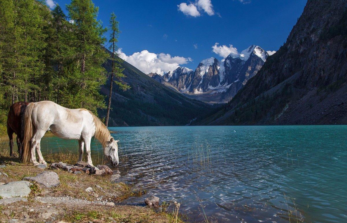 озеро конь в картинках ранее