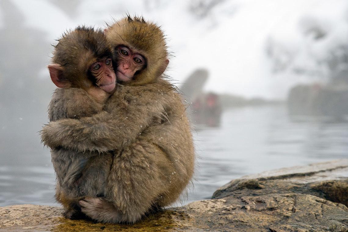 День, прикольные картинки с животными о любви