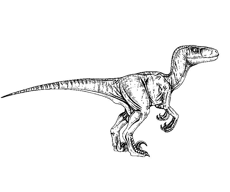Black and white raptor pictures, girl picture nude