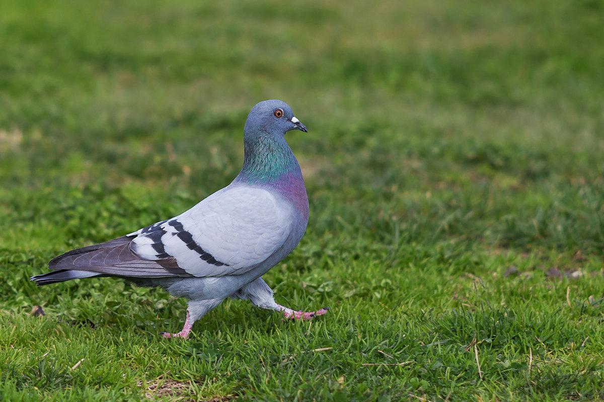 потихоньку голуби сизые фото деньги