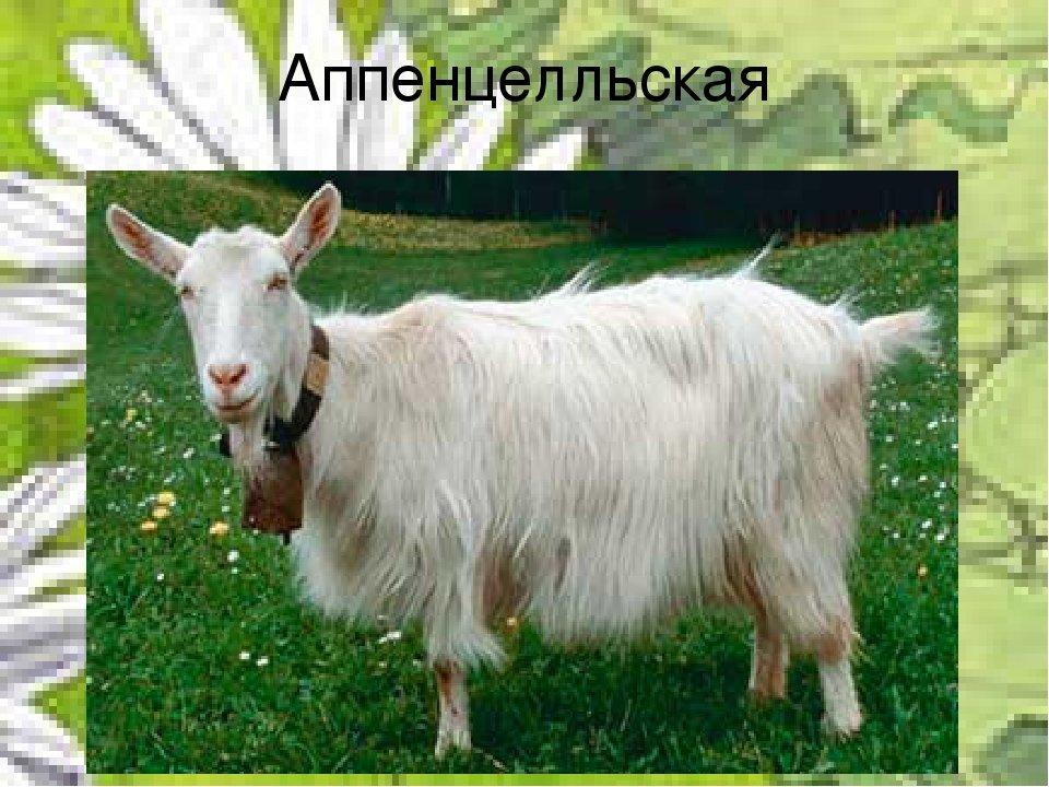 лахесис, отмеряет кривоногая коза фото стилиста блог стилиста