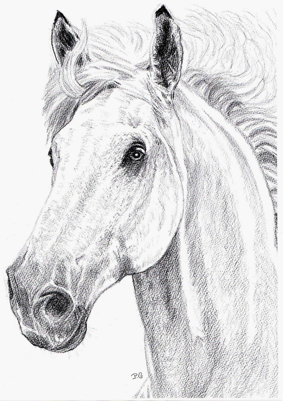 Голова лошади картинки карандашом