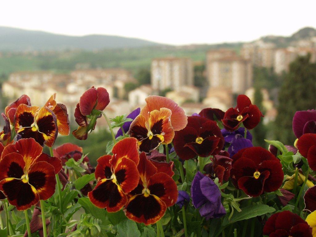 картинки цветы городские цветы растений семян