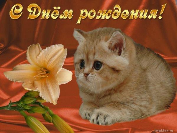 Гифки с днем рождения таня с кошками