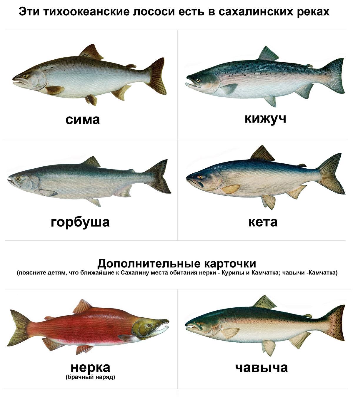 северная рыба с названием и картинками мероприятие, как