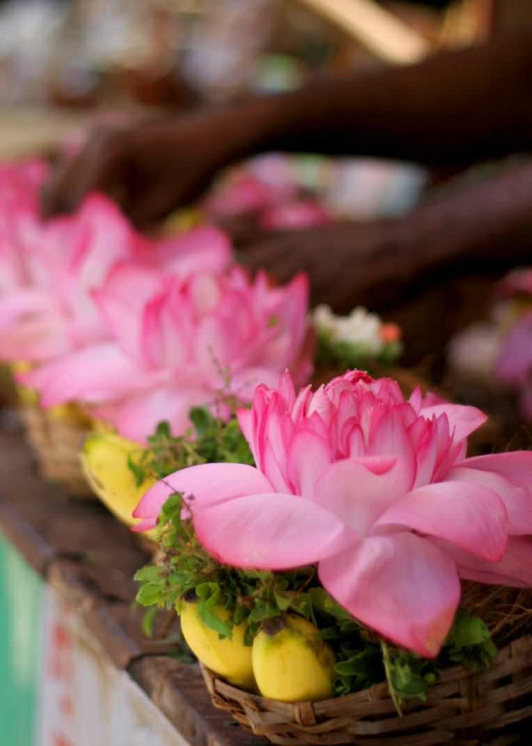 National Flower Of India Lotus Wikipedia Flower Shop Near Me