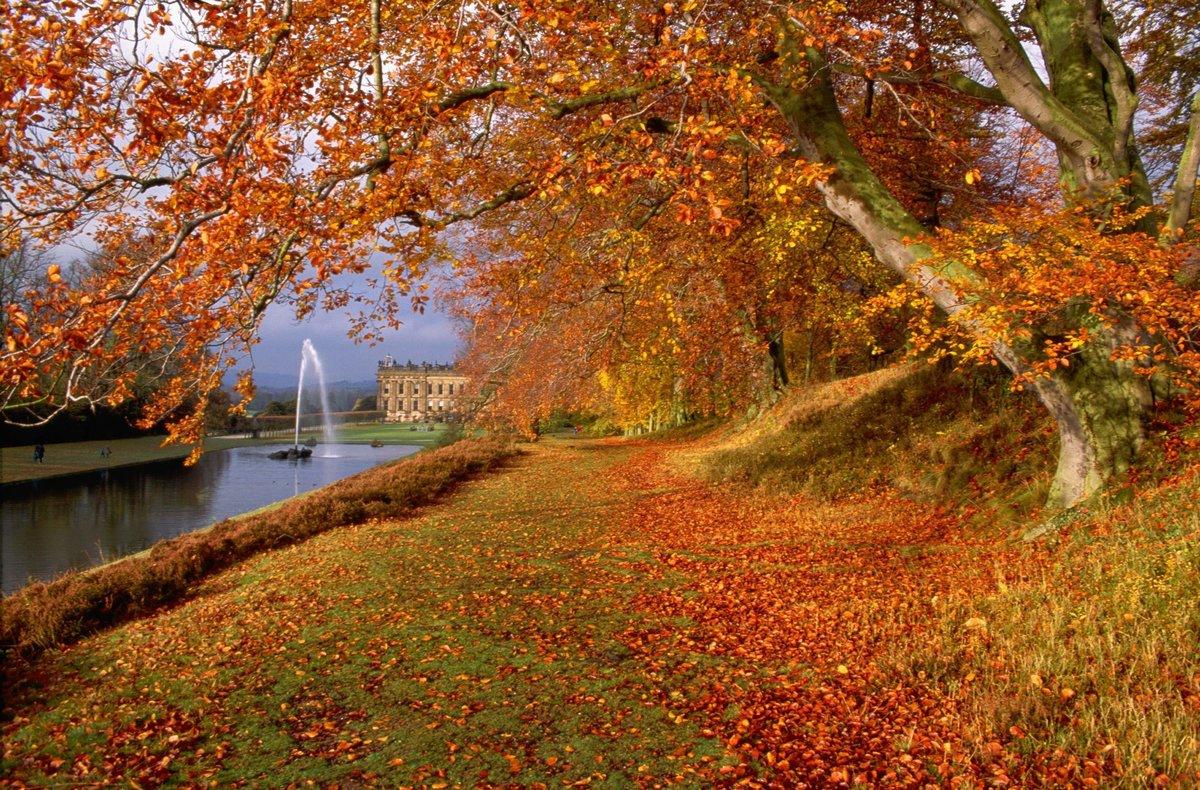 картинки на золотую осень красота осени попробуем