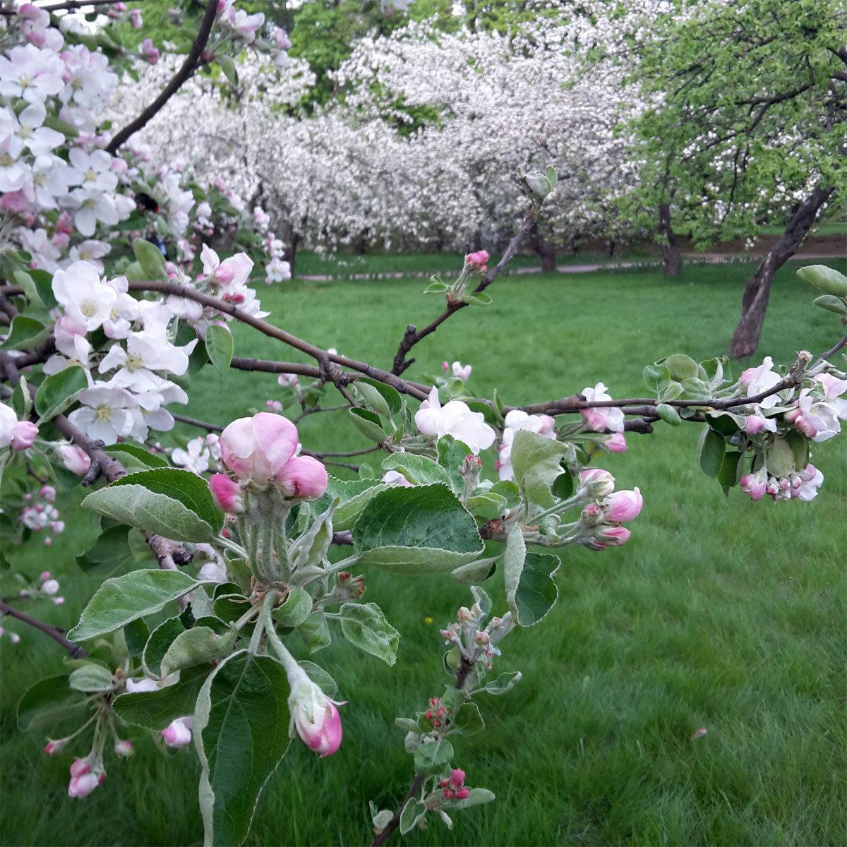 этой картинки когда цветут сады коллектив стал ярким