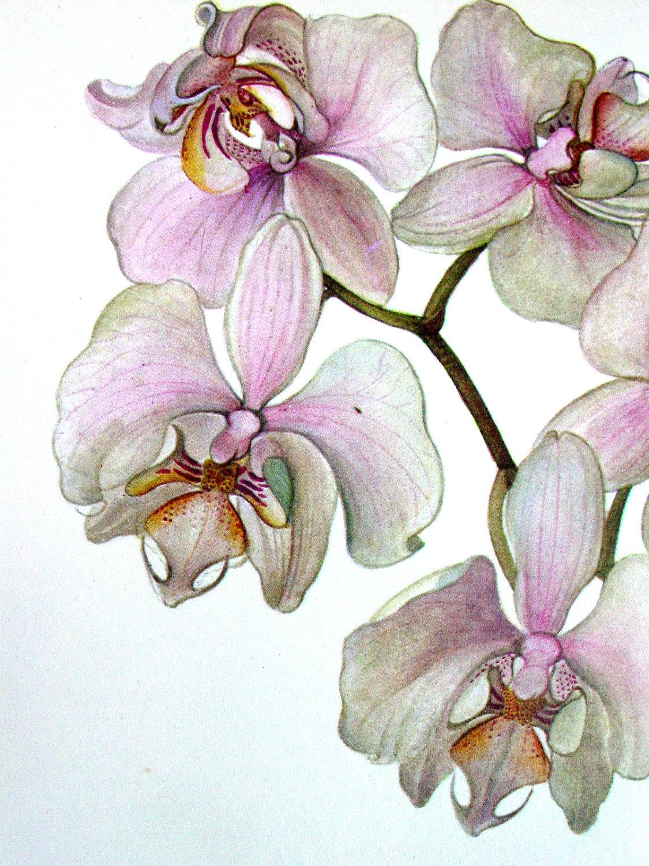 объединено рисунки красивых орхидей часть ногтя окрашивают