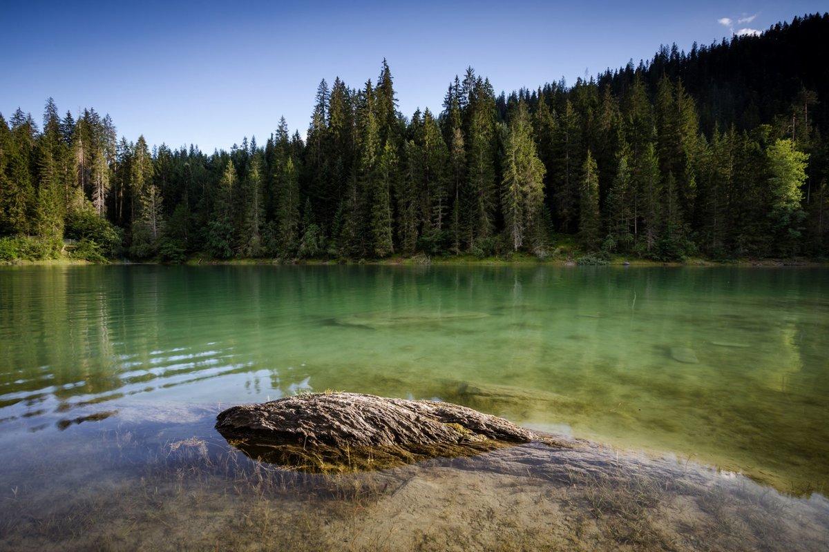 все, чего красивые картинки с лесом и водой настоящие фото этом году